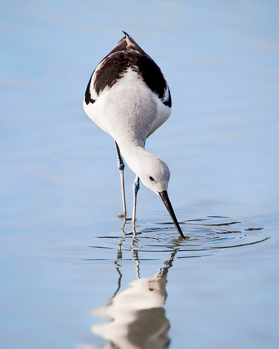 avocet_6844cleaner8x10b